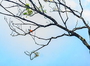 20170519100908AMWayanadWild-BirdWatching-1forweb.jpg