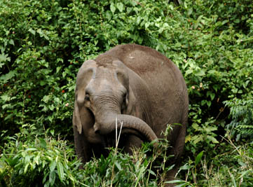 20170527102646AMspicevillage-periyarelephant1.jpg