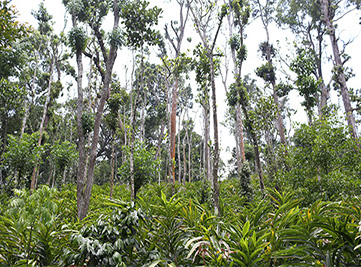 20170615210332PMspicebillage-plantation.jpg